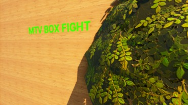 MTV_BOX FIGHT